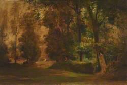 Scene of a Park