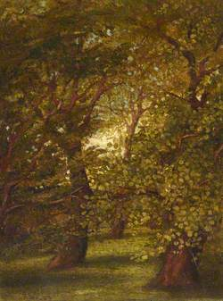 Old Trees in the Garden at Merton Villa
