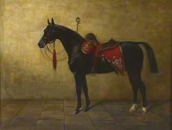 'Black Prince'