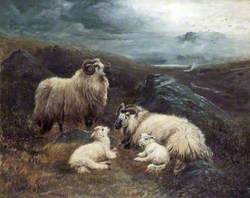 Four Sheep in a Landscape