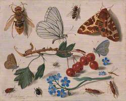 Butterflies, Moths and Insects with Sprays of Common Hawthorn and Forget-Me-Not