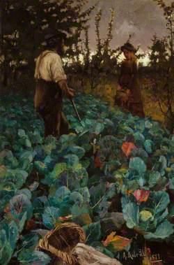 A Cabbage Garden