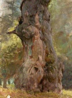 A Gnarled Tree Trunk