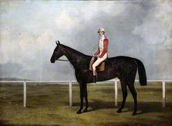 A Racehorse with Jockey Up, on a Racecourse