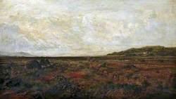 Moorland, near Barmouth
