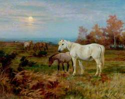 Horses in a Paddock*