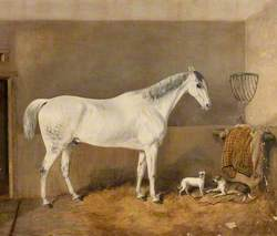 Horse Owned by Mr Robert White