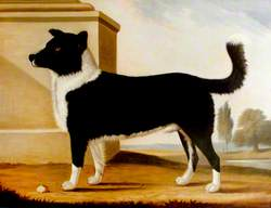 Lord Byron's Dog 'Boatswain' (1803–1808) (The Newfoundland)