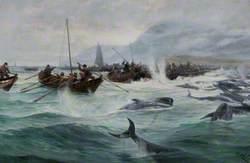 Driving Bottle-Nosed Whales – Shetland, 1891