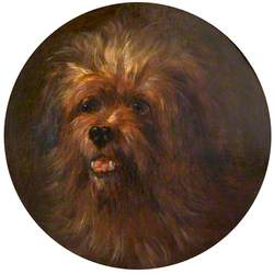 Head of a Yorkshire Terrier