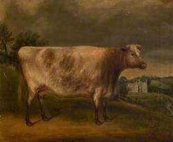 'Waterwitch', Prize Cow, Winner of the First Prize at Totnes, 1851