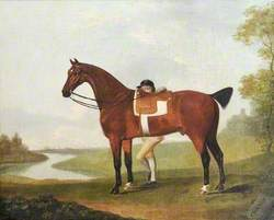 A Bay Horse, 'Chance', and a Jockey