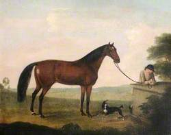 A Brown Horse, a Spaniel and a Groom