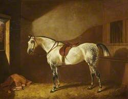Sir Henry Ainslie Hoare's Favourite Hunter