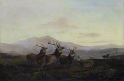 Three Stags with Does in the Highlands