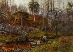 Scene in a Pine Forest with a Stream