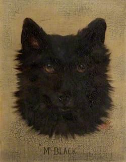A Black Scottie Dog Called 'Mr Black'