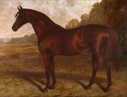 'Hermit', A Bay Racehorse in a Landscape