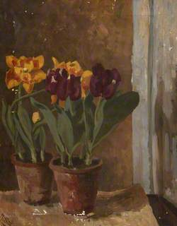 Still Life of Yellow and Purple Tulips in Two Terracotta Pots