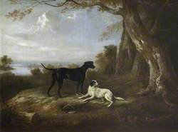 Two Retrievers and a Dead Pheasant