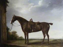A Chestnut Hunter Saddled for a Lady
