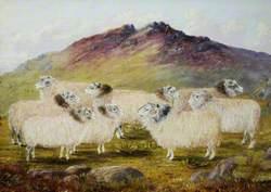 Nine Sheep in a Landscape