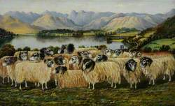 View of Windermere and Langdale Pikes from Low Wood, with a Flock of Seventeen Herdwick Sheep