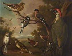 British Birds: Corn Bunting; Great Tit; Bullfinch; Green Woodpecker; Pipits; Wrens; and a Coal Tit