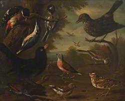 British Birds: Hen Blackbird; Great Tit; Nuthatch; Great Spotted Woodpecker; Cock Whitethroat; Cock Linnet; Cock Blackbird; Woodlark; Hen Linnet; and a Hen Whitethroat