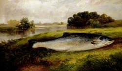 A Salmon Lying on a Riverbank