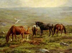 Horses Grazing on Moorland