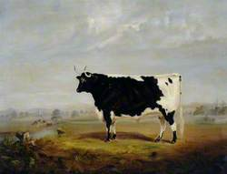 A Black and White Bull in a Landscape