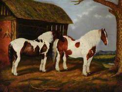 Two Skewbald Horses by a Stable