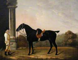 'Sheepface', a Black Charger, with Stainsby the Groom