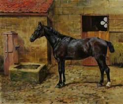 A Black Horse in a Courtyard