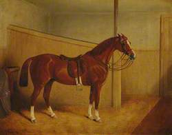 A Saddled Chestnut Horse in a Stable