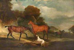 Two Racehorses, Called 'The Sheriff' and 'Bensh'