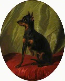 A Manchester Terrier