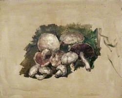 Still Life – Mushrooms
