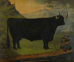 A Black Highland Bull in a Highland Landscape