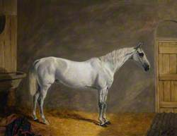 'Time Keeper', the Charger of W. H. Kennedy-Erskine, 17th Lancers