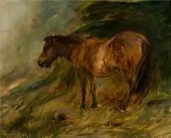 A Bay Pony Sheltering