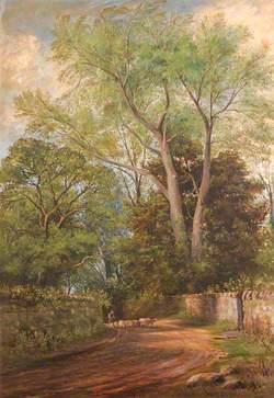 Coed Helen Lane near Caernarfon
