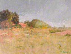 Meadow and Copse