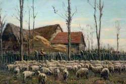 Farmyard with Sheep