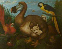 Painting of the Dodo
