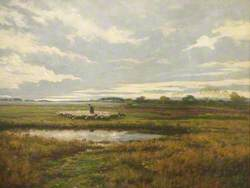 Sheep on Marshes