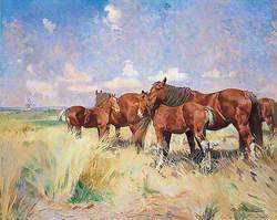 Suffolk Punches, Mares and Foals