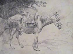 Two Pack Ponies
