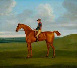 'Sir Thomas'
